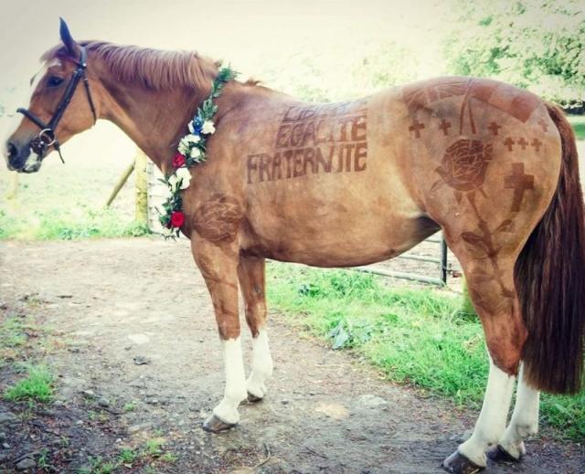 Hairdresser Turns Horses Into Living Works Of Art (7 pics)