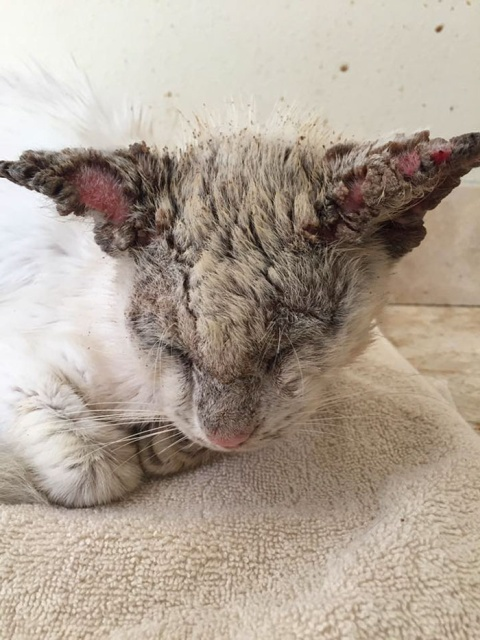 Homeless Cat Opens Its Eyes For The First Time In Months, Stuns Everyone With Their Beauty (20 pics)