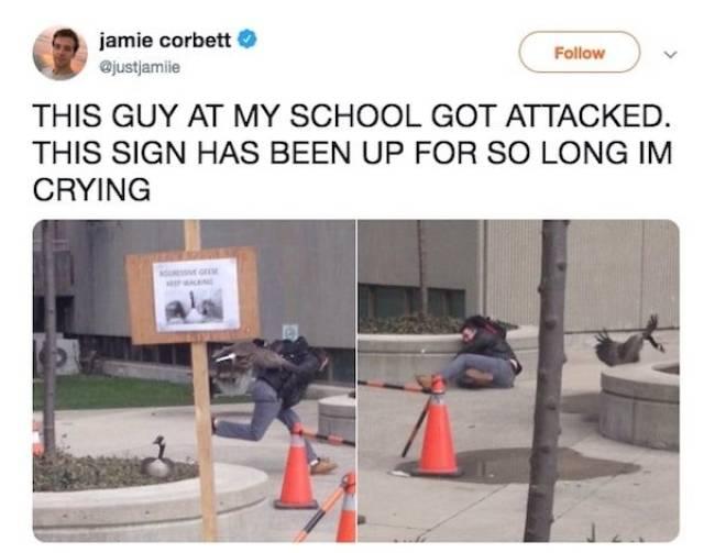 Student Fails (17 pics)