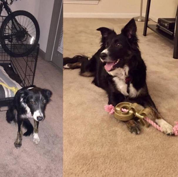 Rescued Animals Before and After (33 pics)