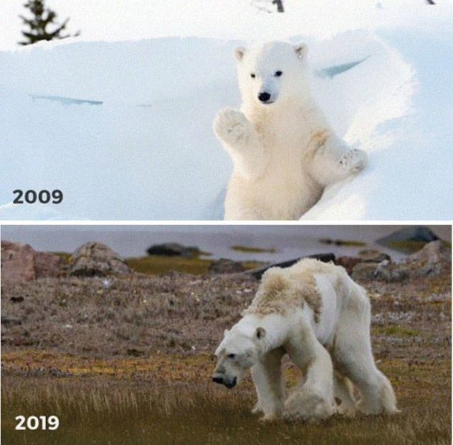 10-Year Challenge In Nature (14 pics)