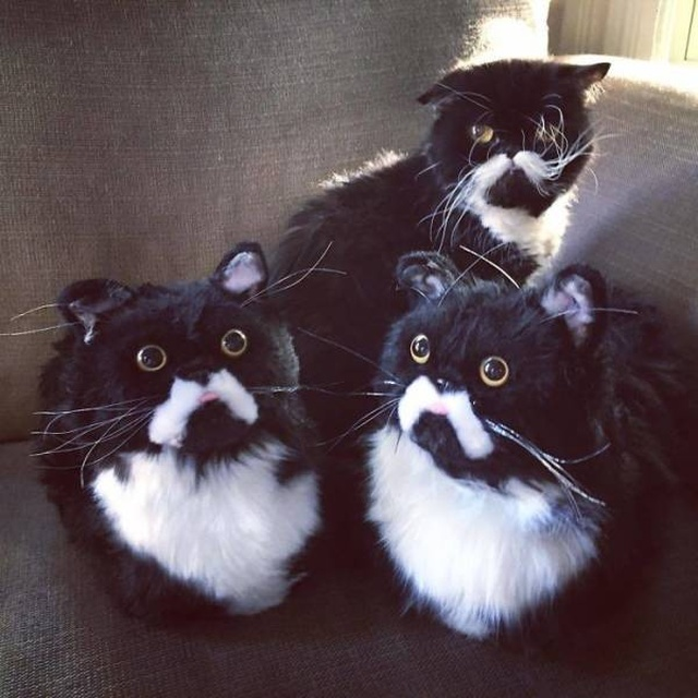 They Make The Exact Copies Of Your Pets (17 pics)