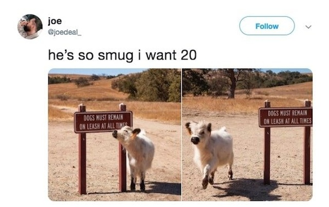 Animal Tweets (20 pics)