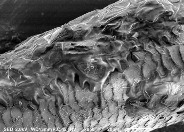There Is Another World On The Other Side Of The Microscope's Lenses (18 pics)