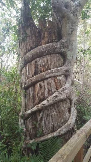 Trees Swallowing Stuff (36 pics)