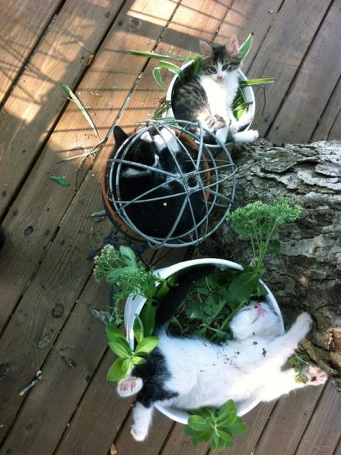 Cat Plants (15 pics)