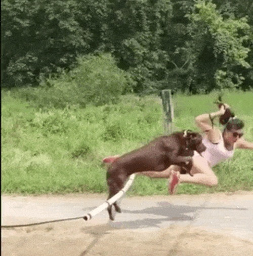 Parkour Dogs (18 gifs)