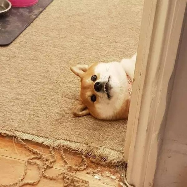 Your Dog Is Not Responding (31 pics)