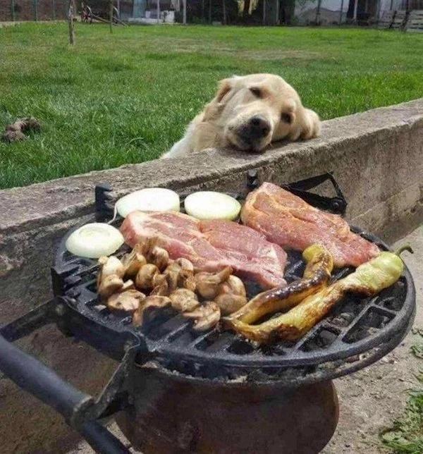 Pets Love Human Food (32 pics)