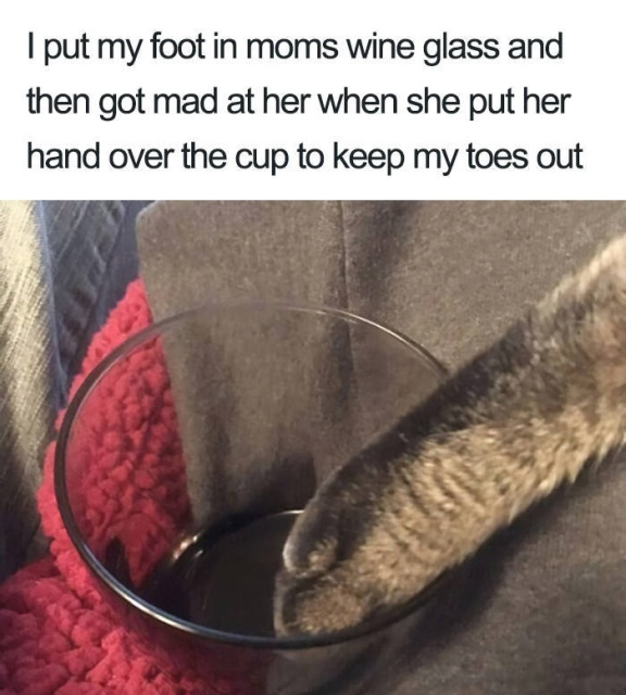 Cats' Crimes (40 pics)
