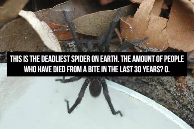 These Facts Are Scary (16 pics)