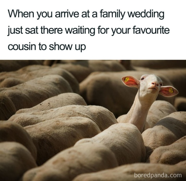 Wedding Memes. Part 2 (25 pics)