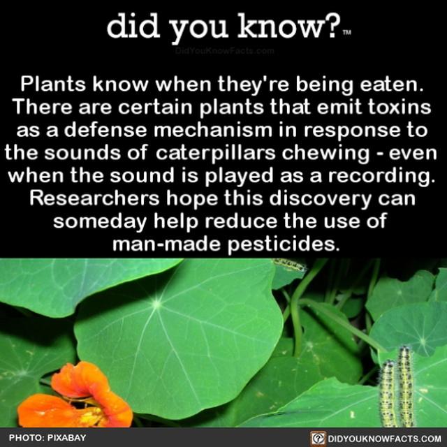 Interesting Facts (20 pics)