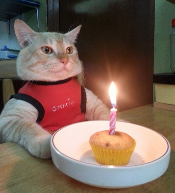 Pets Celebrating Their Birthdays (15 pics)