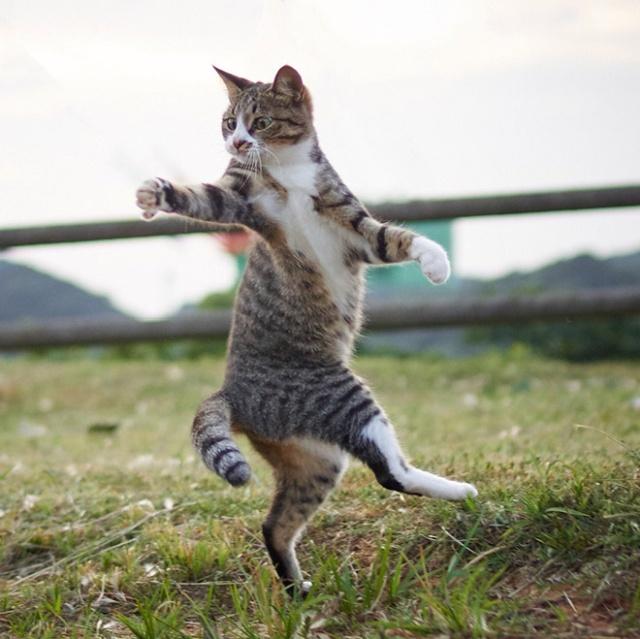 Ninja Cats (15 kép)