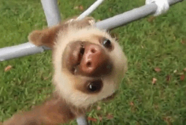 Clumsy Animals (16 gifs)