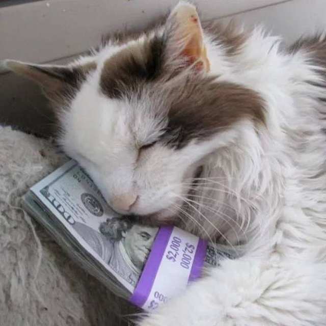Cats And Money (30 pics)