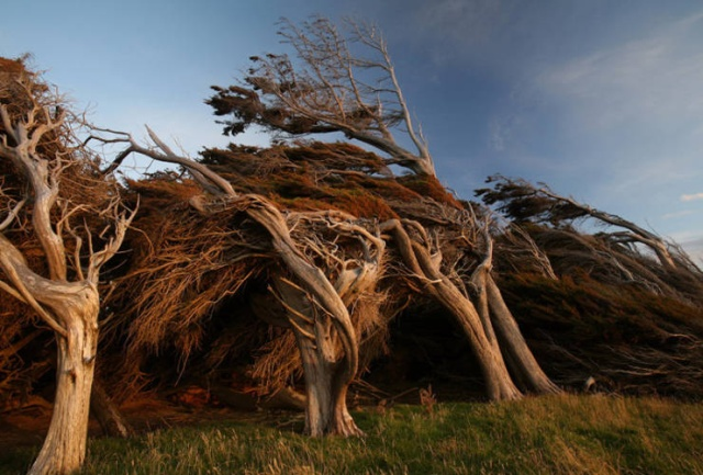 Nature Is Very Strong (19 pics)