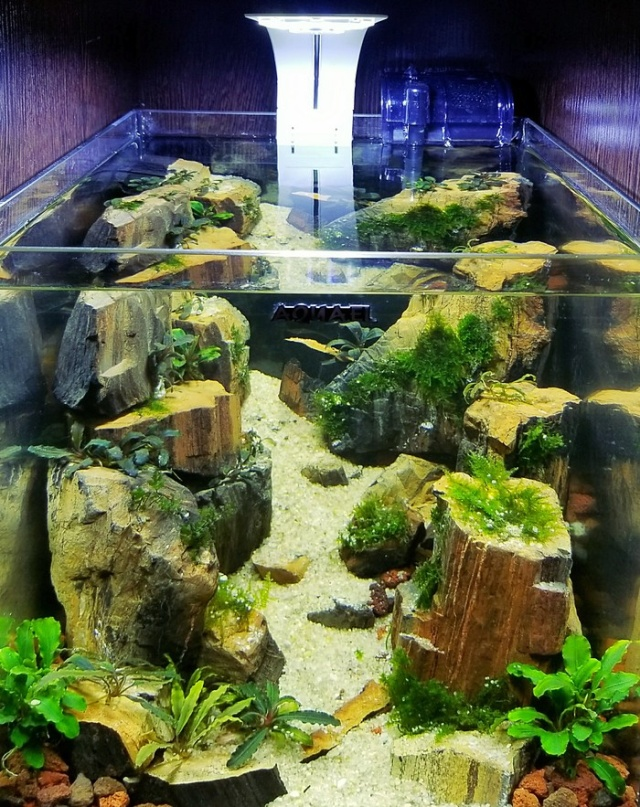 Making A Nice Aquarium (9 pics)