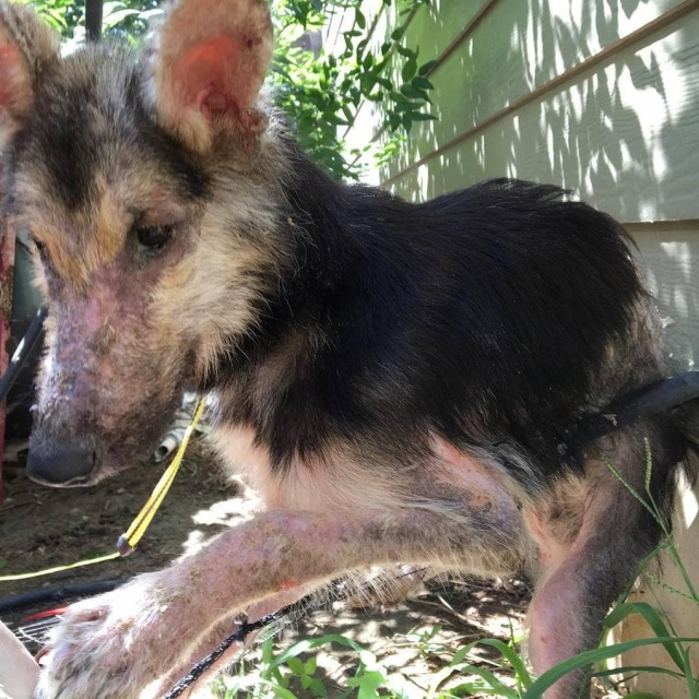 Stray Dog Before And After The Adoption (24 pics)