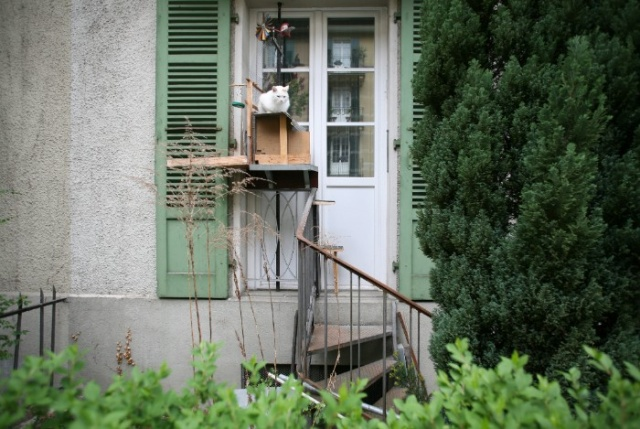 Cat Ladders In Switzerland (19 pics)