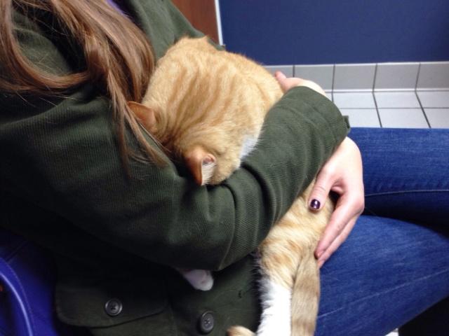 Brilliant Hiding Spots Cats Have Found While Avoiding The Vet (20 pics)