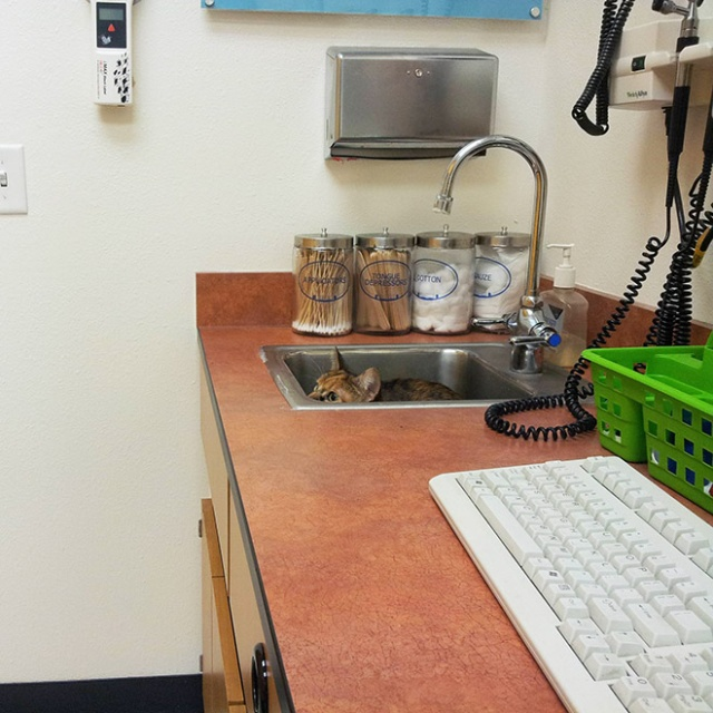 Brilliant Hiding Spots Cats Have Found While Avoiding The Vet (20 pics)