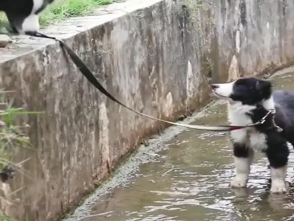 Good Doggo!