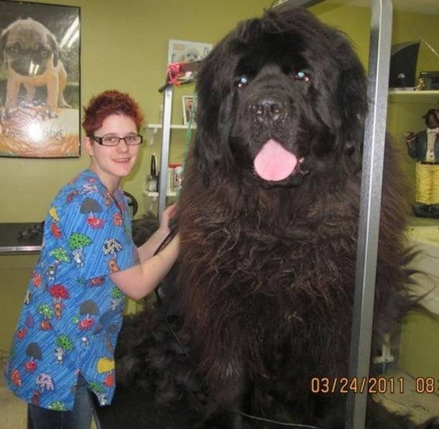 Animals With Strange Sizes (21 pics)