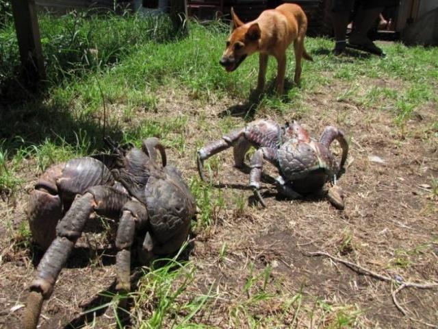 Animals With Strange Sizes (21 pics)