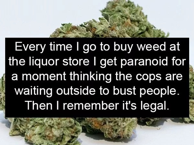 This Feels Illegal (19 pics)