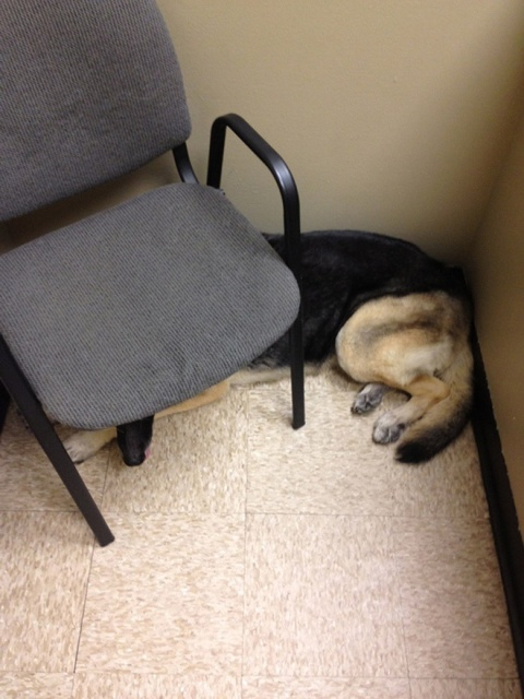Poor Dogs At The Vet (20 pics)