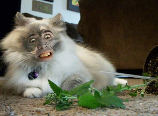 Cats With Nicolas Cage's Face (21 pics)