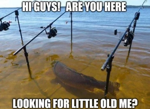 Outdoors Memes (24 pics)