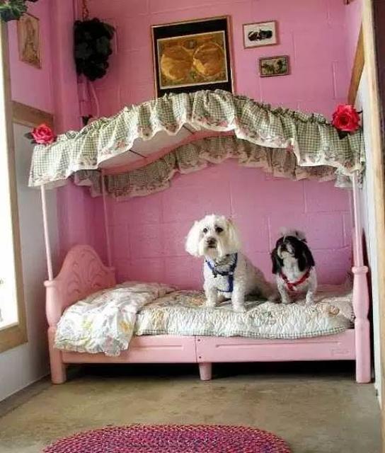Rich Pets (34 pics)