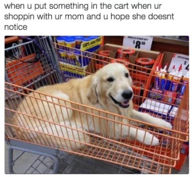 Dog Memes (31 pics)