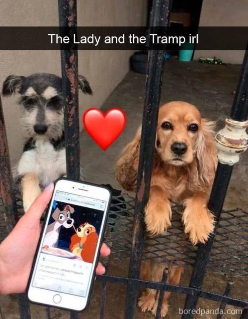 Dog Snapchats (56 pics)