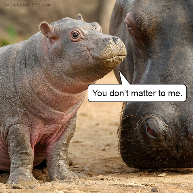 Delivering Bad News With Baby Animals (19 pics)