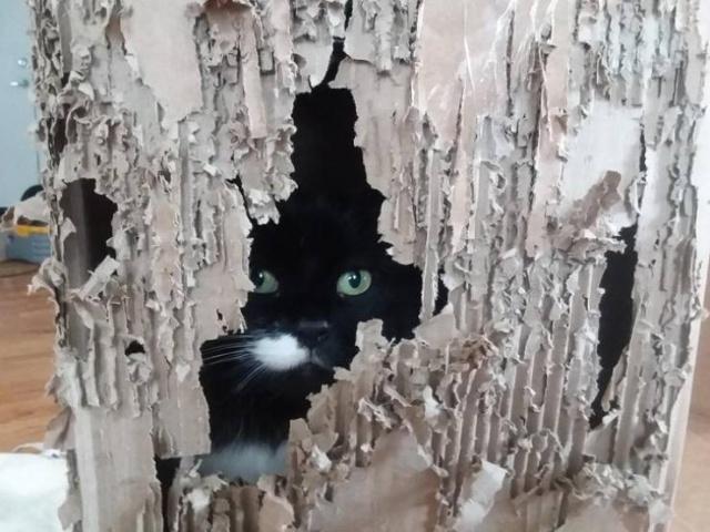 Funny Cats (22 pics)