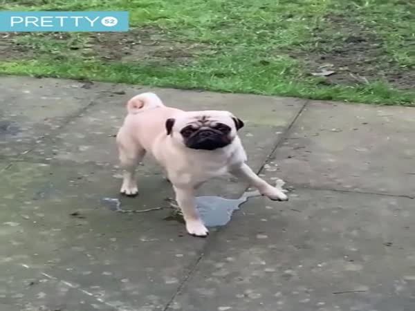 This Dog Lifts The Wrong Leg When Peeing