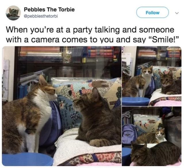 Tweets About Being An Introvert (28 pics)
