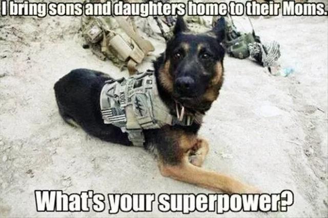 Service Dog Memes (36 pics)