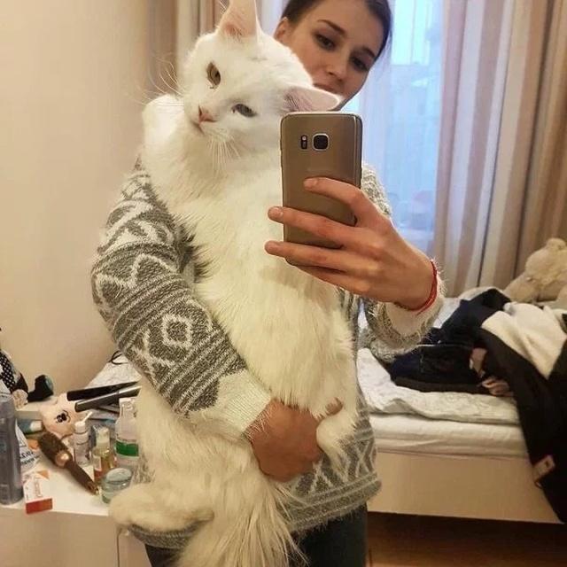 Big Cats (21 pics)