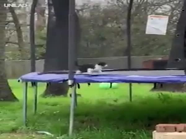 Cat Stuck On Trampoline