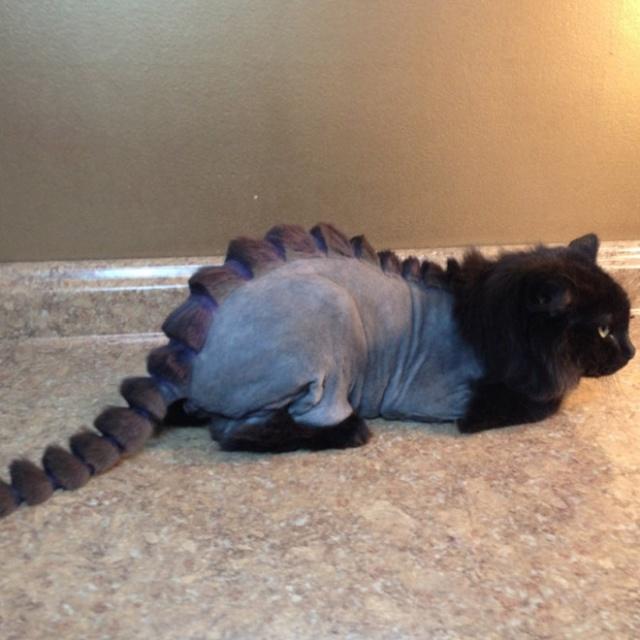 Dinosaur Cat Haircuts 20 Pics