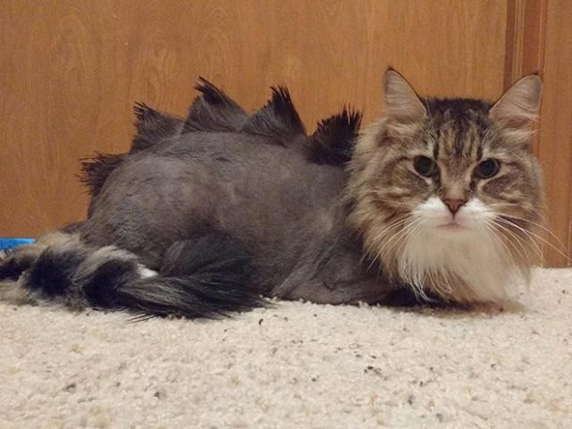 Dinosaur Cat Haircuts (20 pics)