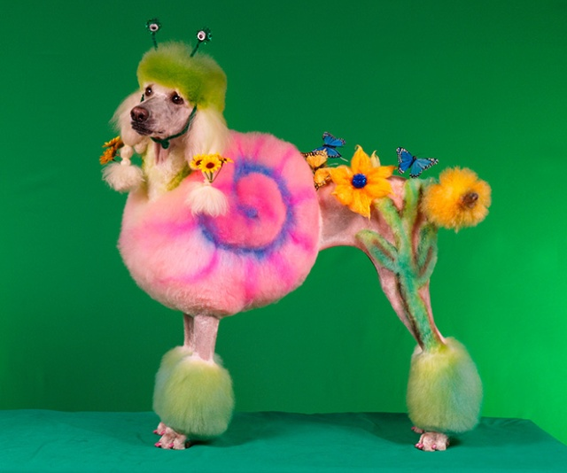 Competitive Dog Grooming (20 pics)