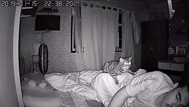 Cats At Night (6 pics)
