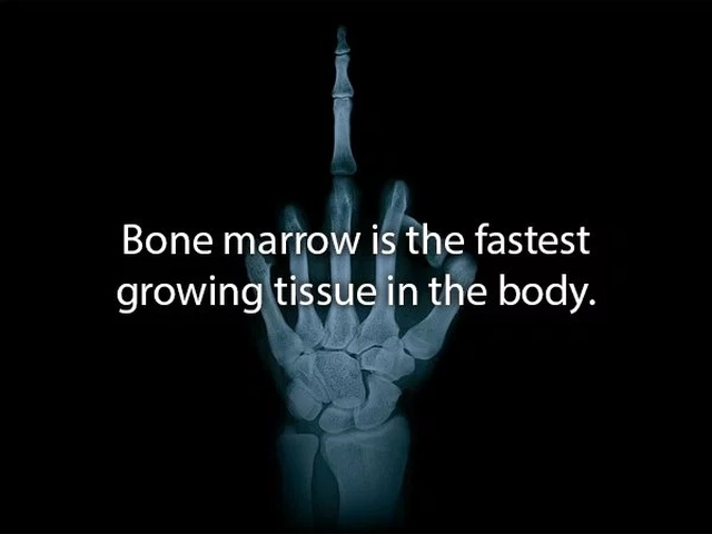 Facts About the Human Body (20 pics)