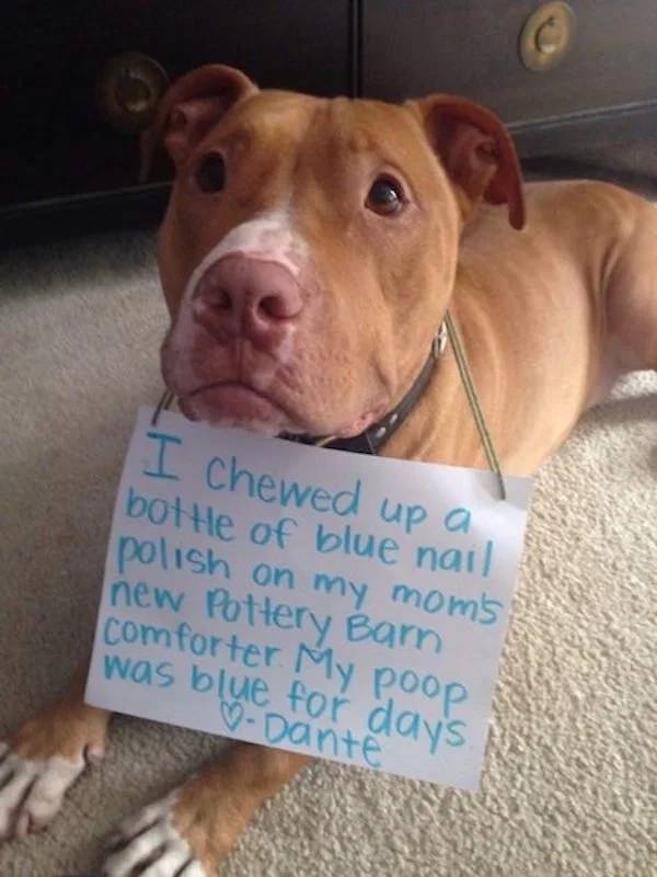 Pet Shaming (26 pics)